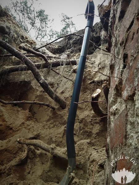 Korzenie jabłoni poszukują wody w studni
