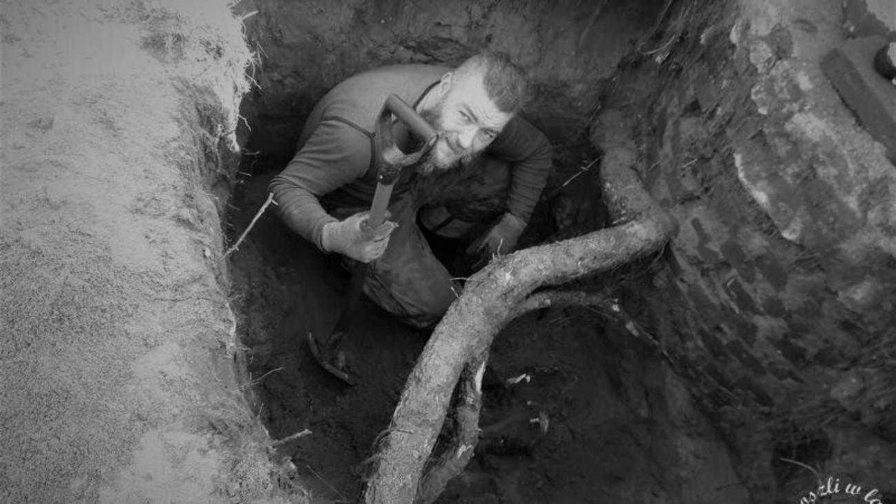 Korzenie drzewa szukają wody