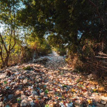 Plasikowe śmieci w lesie